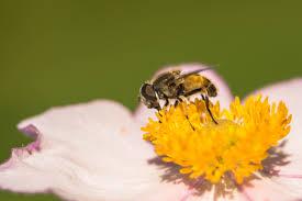 free images nature blossom flower petal bloom pollen stamp