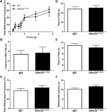 enhanced nociception in angelman syndrome model mice journal of