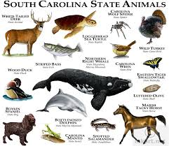 South Carolina wild animals images State animals of south carolina line art and full color illustrations jpg