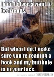 Cat Lady Meme - top 11 best pics of the crazy cat lady meme photos cat crazy