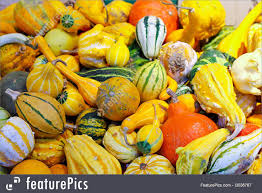 small pumpkins food pumpkin assortment stock picture i3036767 at featurepics