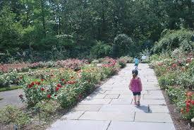 Botanic Garden Bronx by Peggy Rockefeller Rose Garden Picture Of New York Botanical