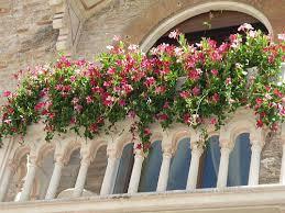 kletterpflanzen fã r balkon mediterrane pflanzen fr balkon möbel ideen und home design