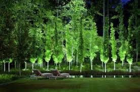 stunning what is the name of the narrow columnar tree