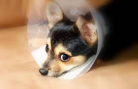 Buster Comfort Collar Homemade Dog Cone How To Make One Diy Projects