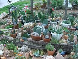 small container cactus garden design share photos gardening
