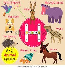 cute children zoo alphabet h letter stock vector 491883028