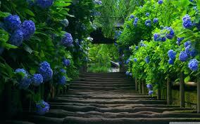 japanese garden stairs 4k hd desktop wallpaper for 4k ultra