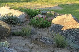 plants for rock gardens rock garden flowerswheatandfabric