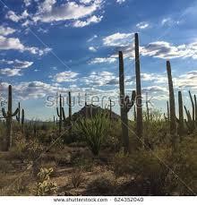Park West Landscape by Arizona Landscape Stock Images Royalty Free Images U0026 Vectors