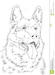 german shepherd coloring pages free portrait of german shepherd sketch on paper stock images image