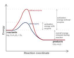 how to write reaction paper step by step reaction coordinate wikipedia