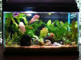 what you should before setting up a fish tank
