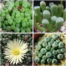 Plant For Desk 100 Plant For Desk Garden Indoor Palm Lowes Indoor Plants
