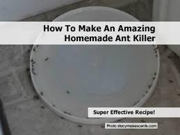 Natural Ant Killer For Kitchen by 4 Ant Bait Killer Jpg