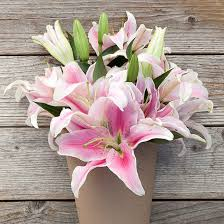 pink lillies karma pink white bouquet the bouqs co