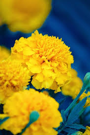 Color Yellow 227 Best Yellow U0026 Blue Images On Pinterest Blue Yellow