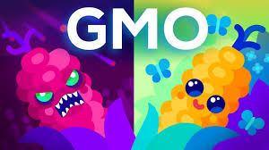Are Gmos Good Or Bad Genetic Engineering Our Food Youtube