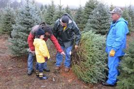 best christmas tree shopping done at local farms massachusetts