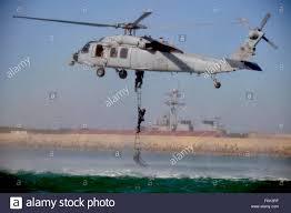 belgian shepherd navy seals seal team stock photos u0026 seal team stock images alamy