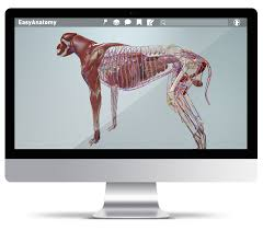 App For Anatomy And Physiology Easyanatomy 3d Canine Anatomy For Veterinary Students