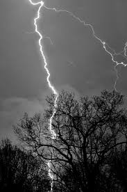 what happens when lightning strikes a tree wonderopolis