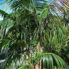 nz native plants 10 great tropical plants for auckland