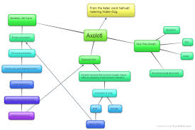 What Is A Bubble Map The Lost Roadrunner Concept Map Of The Axolotl
