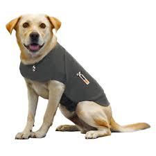 Radio Collar For Beagle Beagle Tips