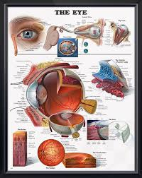 The Anatomy And Physiology Of The Eye Top 25 Best Vision Eye Ideas On Pinterest Universe Theories