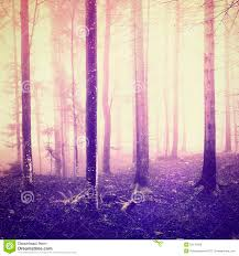 Light Purple Color by Fantasy Light And Purple Color In Forrest Stock Photo Image