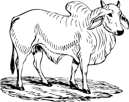 bull coloring book colouring sheet coloring book colouring