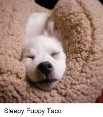 Puppy Meme - 25 best memes about sleepy puppy sleepy puppy memes