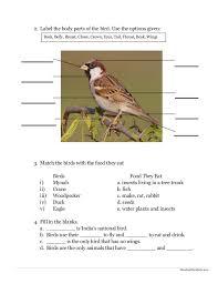 environmental science evs birds worksheet class ii