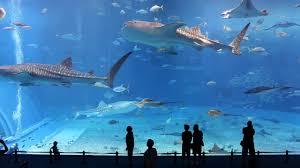 Home Aquarium by Fish Tank Biggest Home Aquarium In The World Indoor Tank Largest