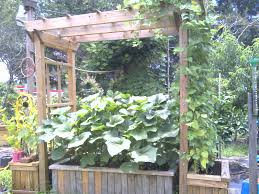 gallery vegetable gardener