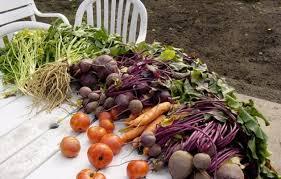 cuisiner les l馮umes anciens cuisiner des légumes oubliés quotibien fr