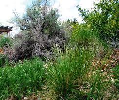 montana native plant society nature observation discovery community spotlight on