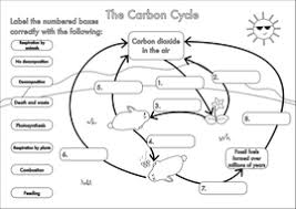 gcse carbon cycle worksheets and a3 wall posters by beckystoke