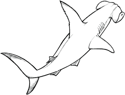 Printable Shark Coloring Pages Hammerhead Shark Coloring Page Coloring Pages Sharks Printable