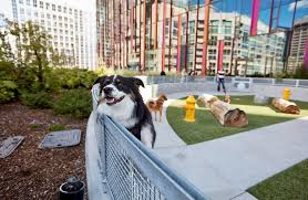 australian shepherd yahoo answers why amazon let 4 000 dogs into its seattle headquarters video