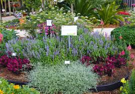 small space cut flower garden ideas costa farms