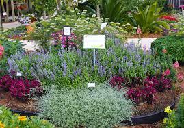 Pretty Flower Garden Ideas Small Space Cut Flower Garden Ideas Costa Farms