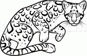 draw an ocelot step by step drawing sheets added by dawn