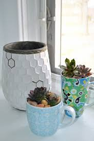 make succulent planters out of chipped teacups
