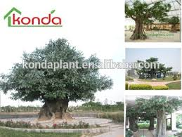 best selling plastic banyan tree outdoor high imitated