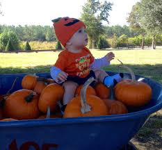 100 pumpkin patches in lafayette louisiana kpel 96 5 listen
