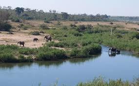 south africa u0027s big five frogmut com