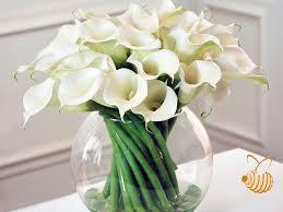 Calla Lillies Flower Types Calla Lilies Zantedeschia How To Plant Grow And