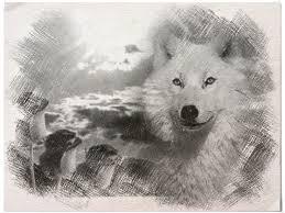 144 best aullido del lobo real imagenes images on pinterest